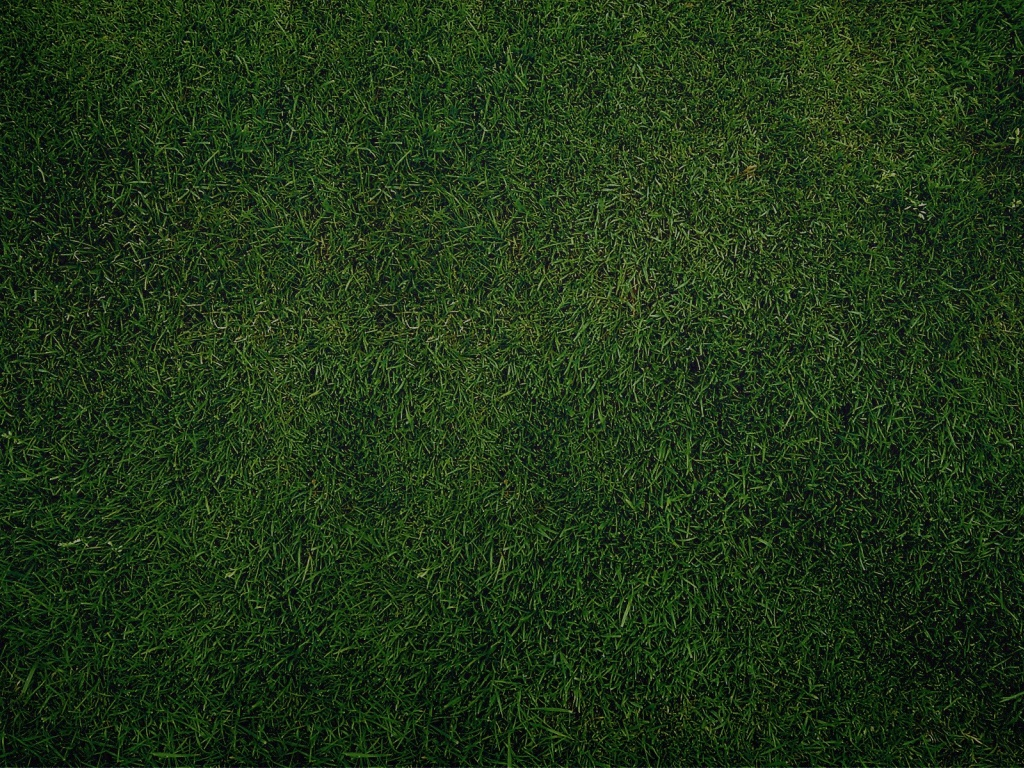 Background image 1024x768 - 1024x768 Green Grass Background