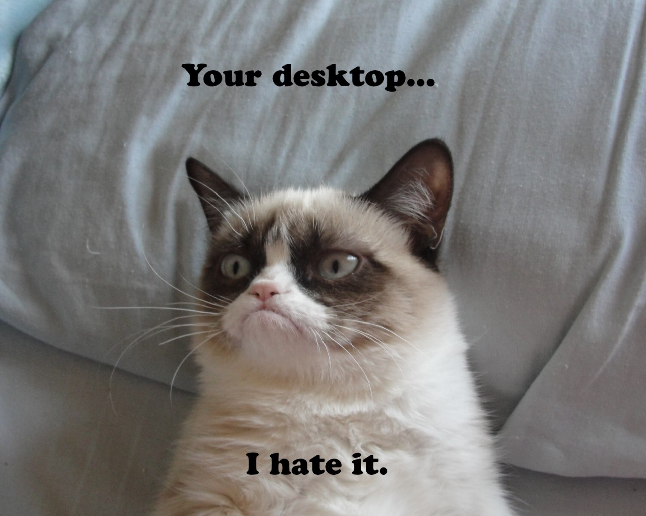 1280x1024 grumpy cat desktop pc and mac wallpaper
