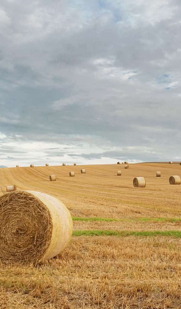 600x1024 harvest field hay bales galaxy tab 2 wallpaper. Black Bedroom Furniture Sets. Home Design Ideas