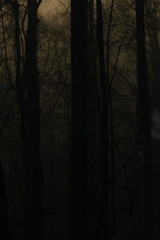 320x480 Haunted Forest Iphone 3g Wallpaper