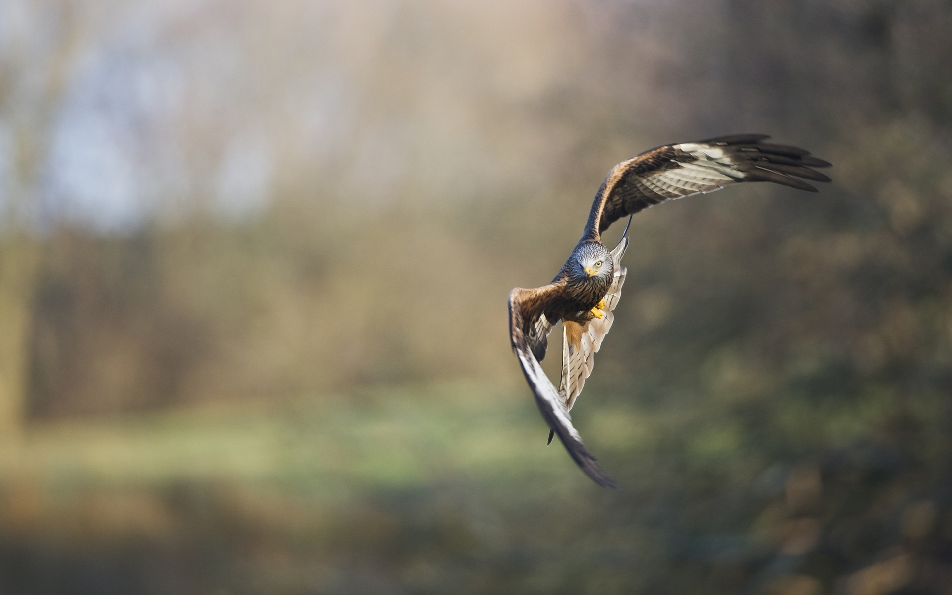 Hawk in flight wallpapers hawk in flight stock photos - Hawk iphone wallpaper ...