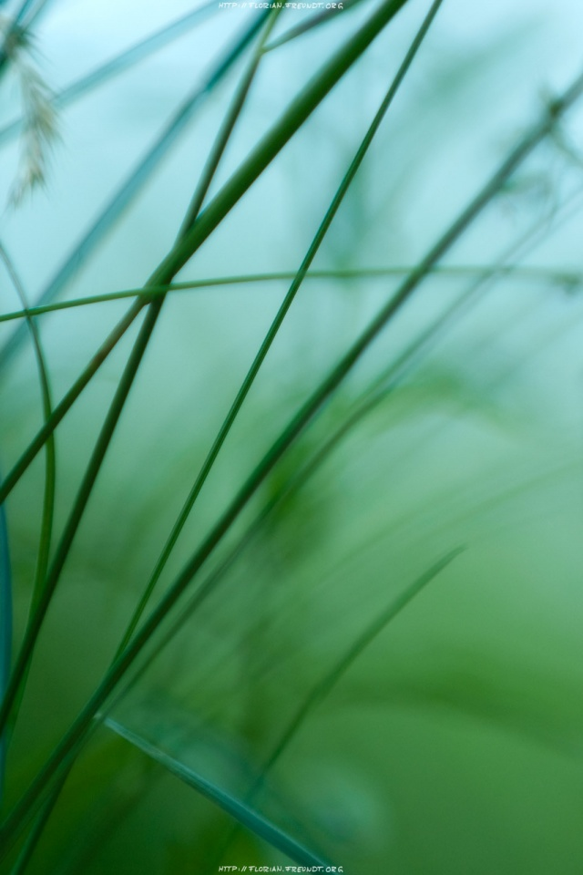 640x960 Hd Wide Green Iphone 4 Wallpaper