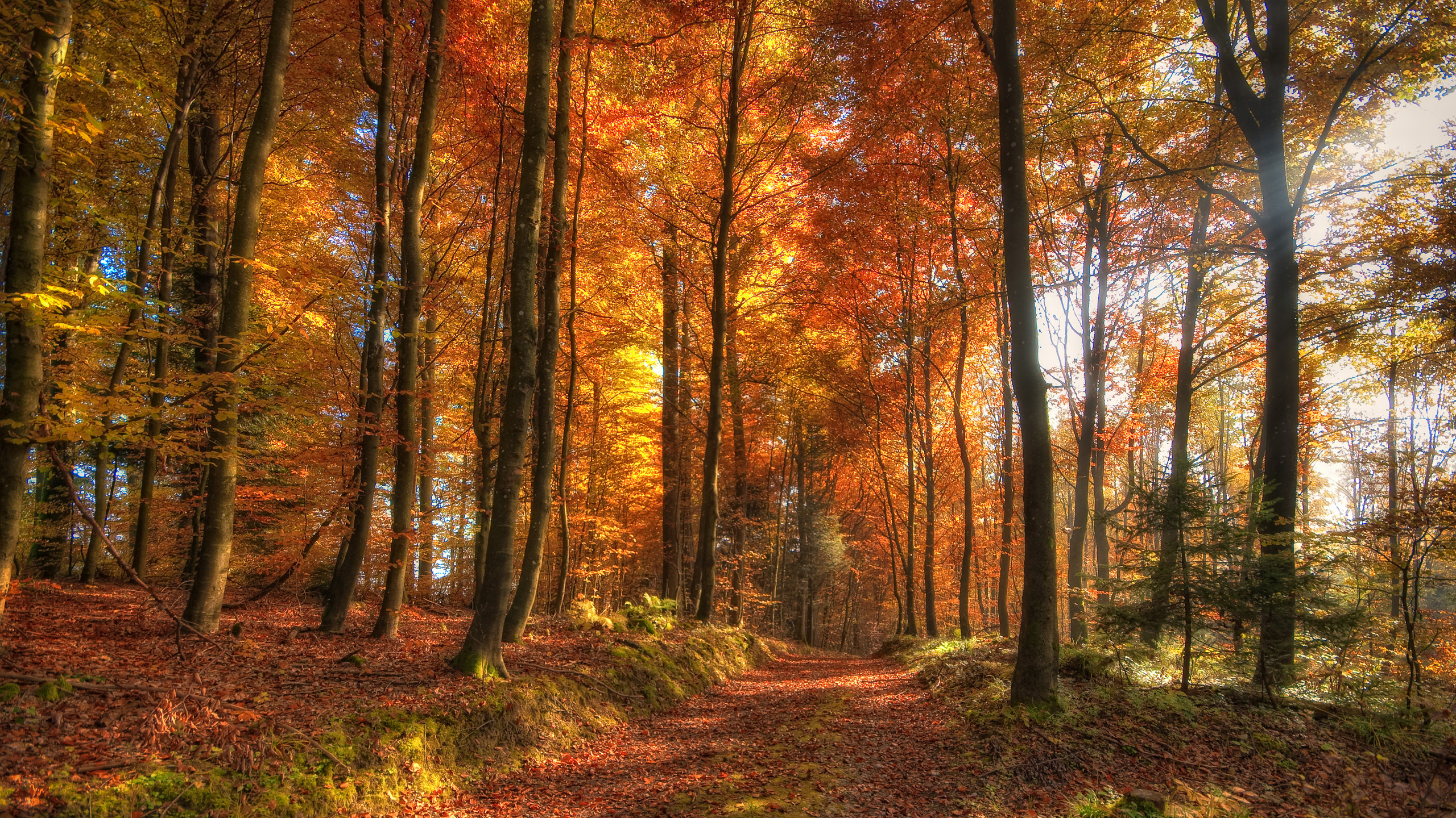 2560x1440 Hdr Autumn Forest Desktop Pc And Mac Wallpaper