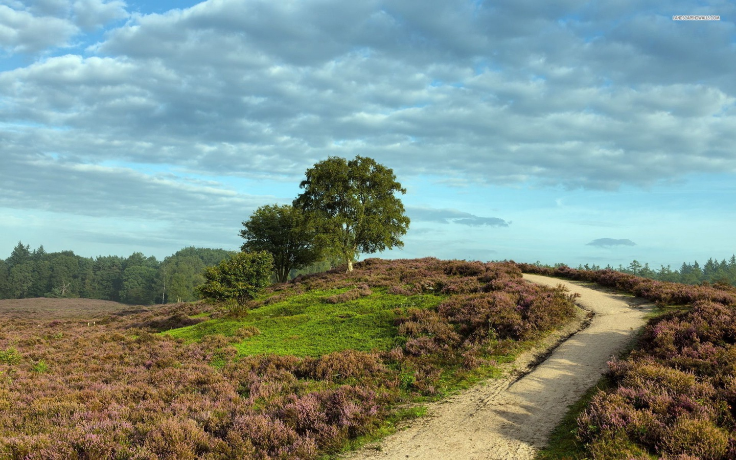 1440x900 Heather Field Path Hills Trees