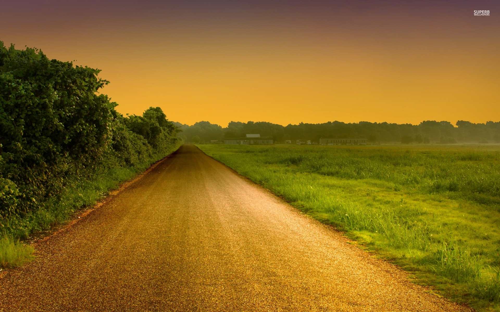 Image Hedge Road Field Golden Sunset Wallpapers And Stock Photos