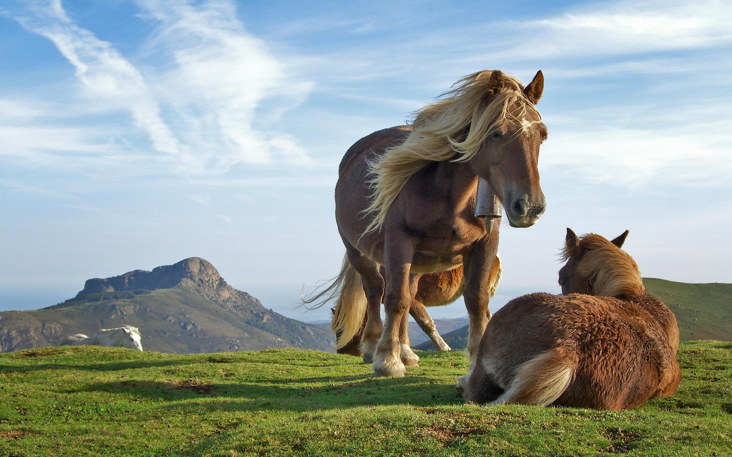 2560x1600 Hill Horses desktop wallpapers and stock photos