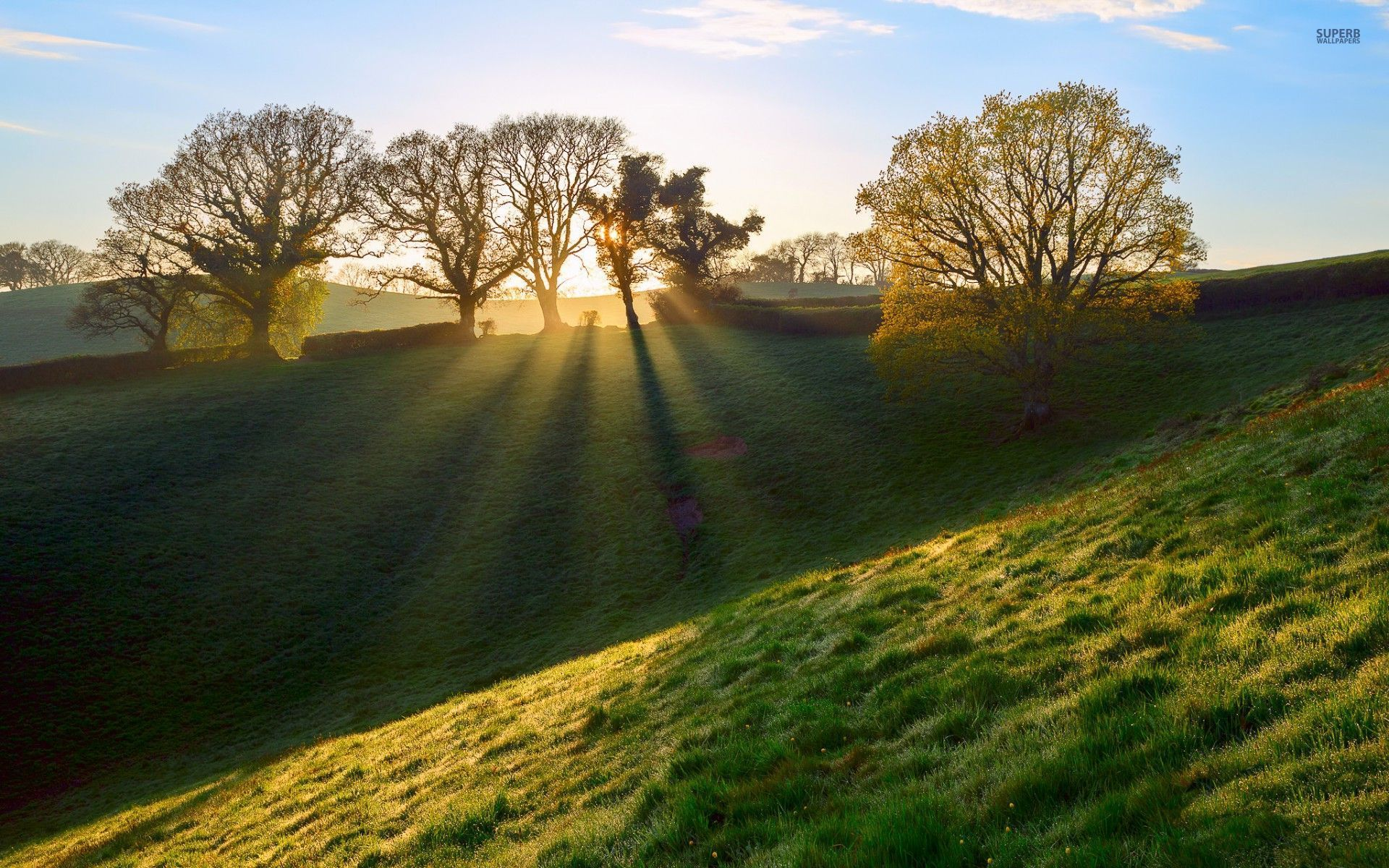 hill trees hedge sun rays wallpapers hill trees hedge
