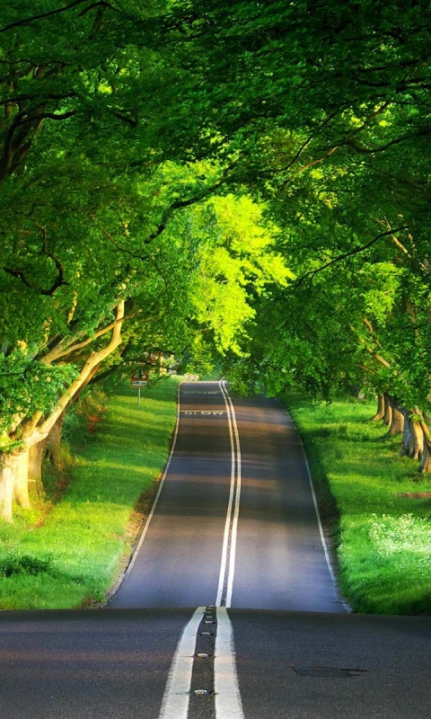 480x800 Hilly Road & Thick Trees