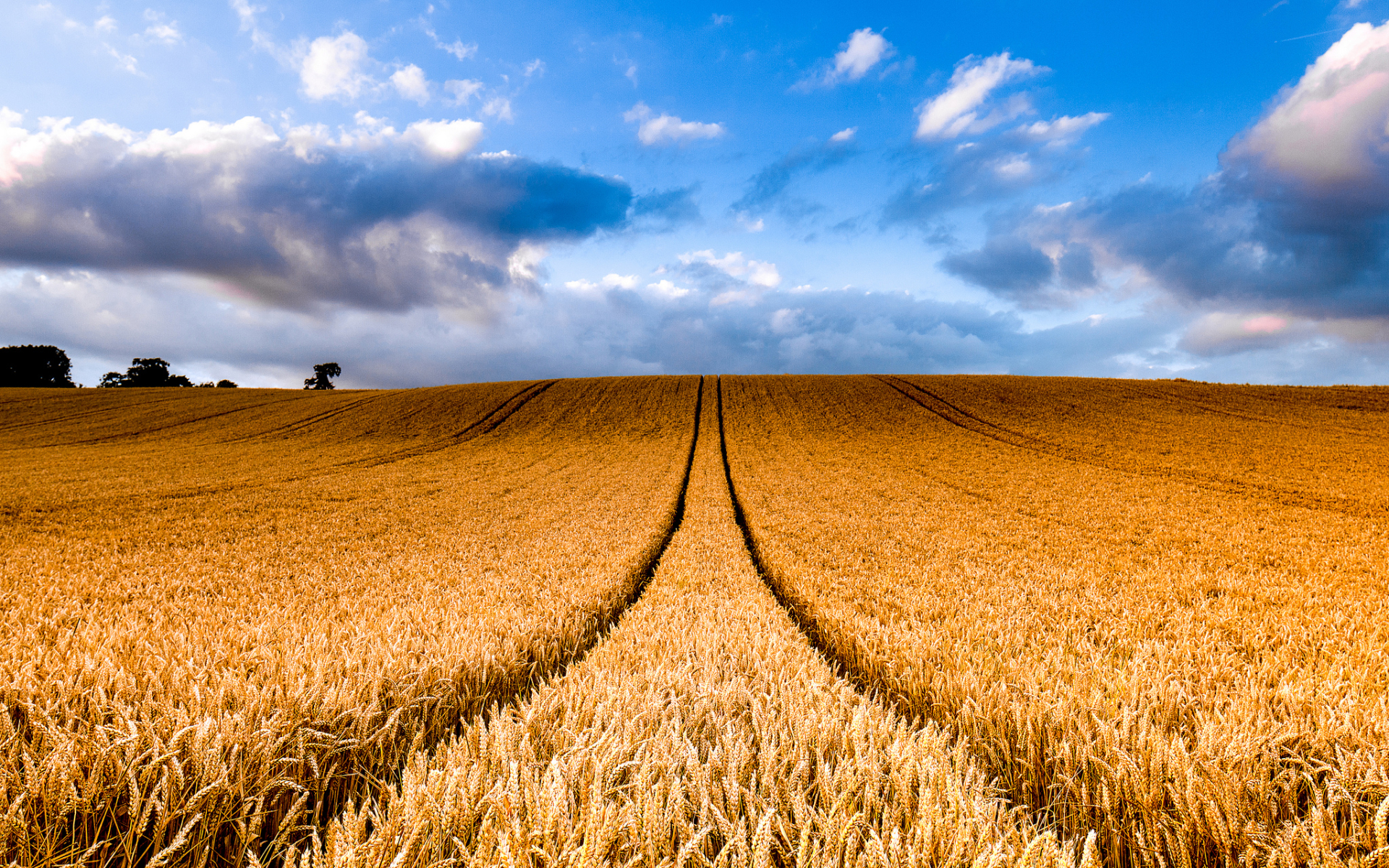 Hilly Wheat Field Trails Sky Wallpapers Hilly Wheat Field Trails