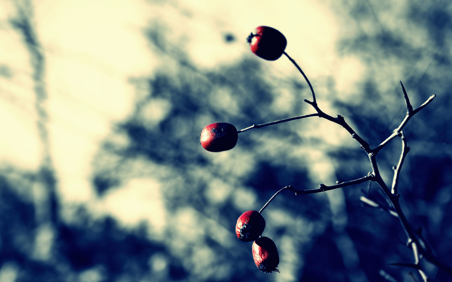 Image Hip Tree Wallpapers And Stock Photos