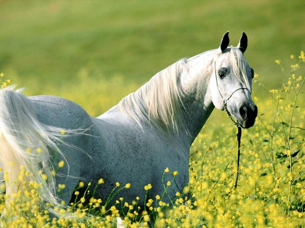 1024x768 horse and flowers desktop pc and mac wallpaper