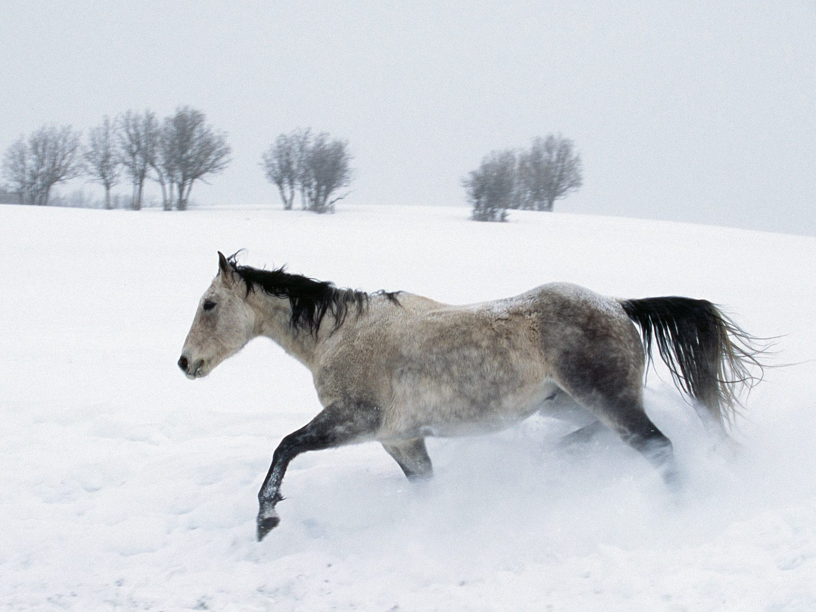 1600x1200 Horse In The Snow Desktop Pc And Mac Wallpaper