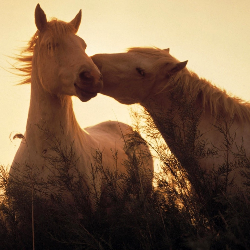 Bible Verses with Horses