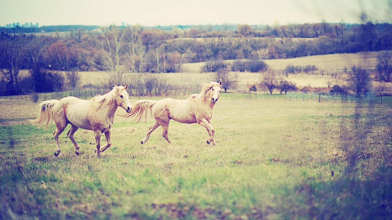 Free Red <b>Horse</b> Pictures Wallpapers in <b>HD</b>, 4K and wide sizes