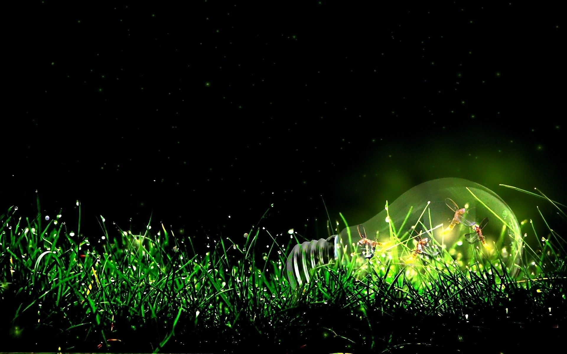 insects bulb light grass wallpapers insects bulb light