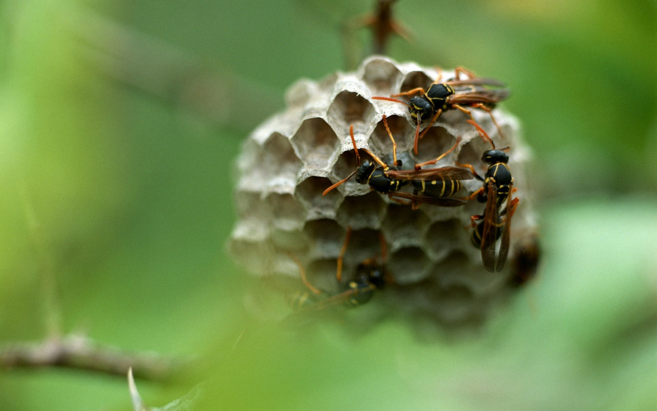 1280x800 insects honeycomb desktop pc and mac wallpaper