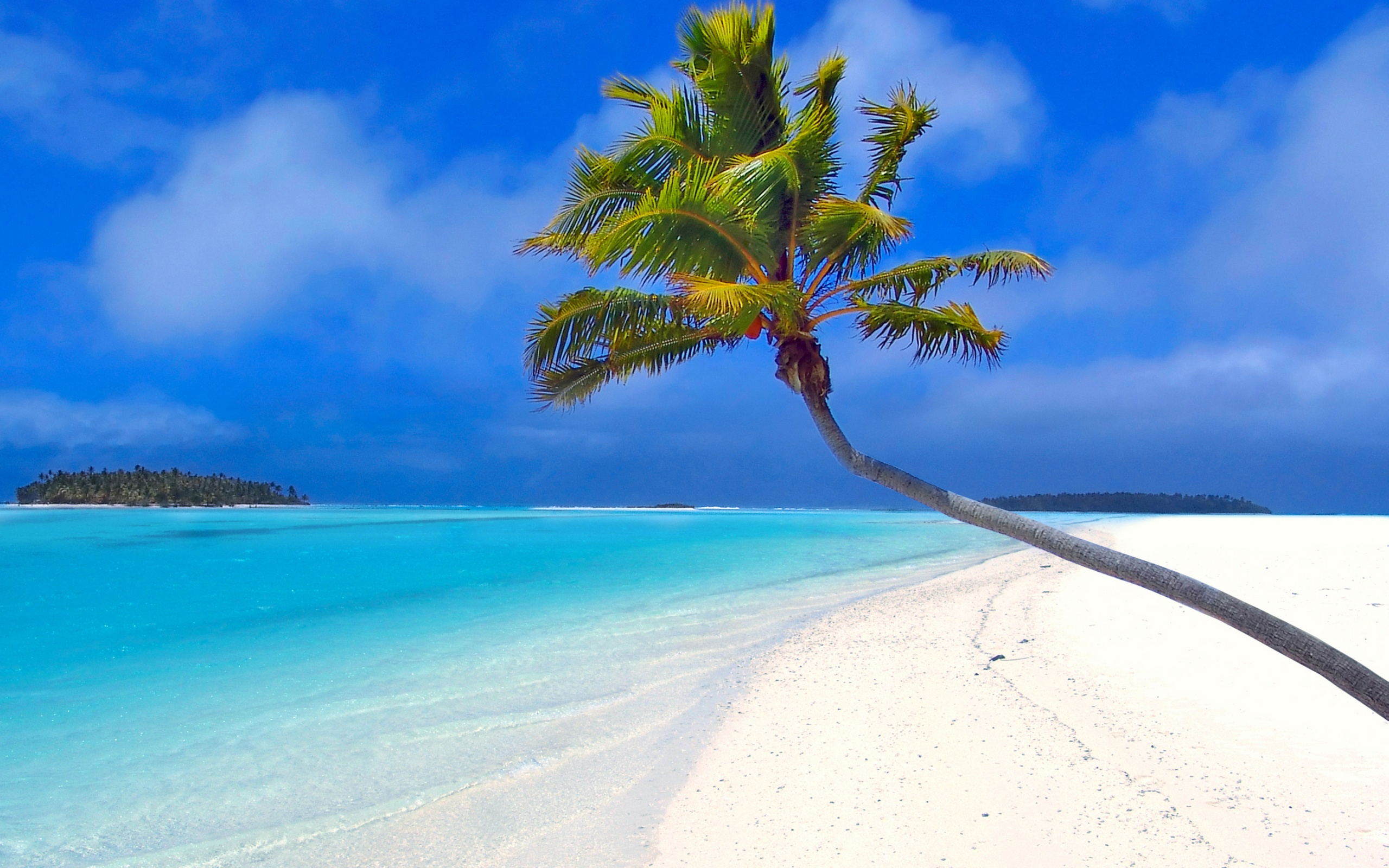 2560x1600 Isolated palm tree desktop wallpapers and stock photos