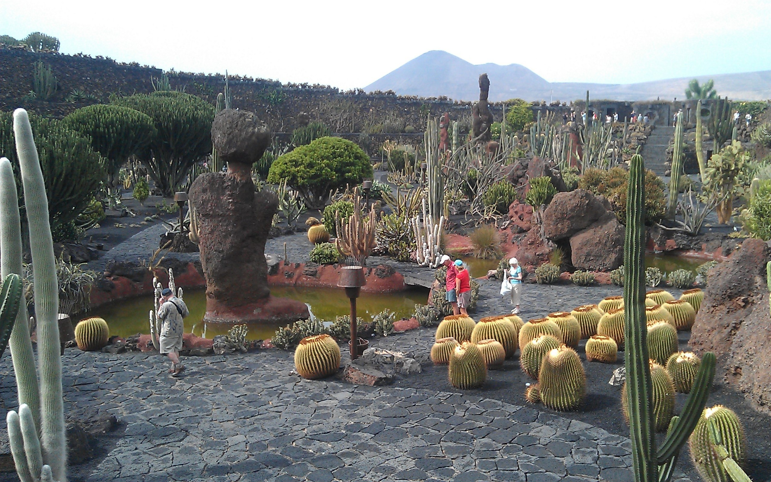 jardin de cactus lanzarote wallpapers and stock photos