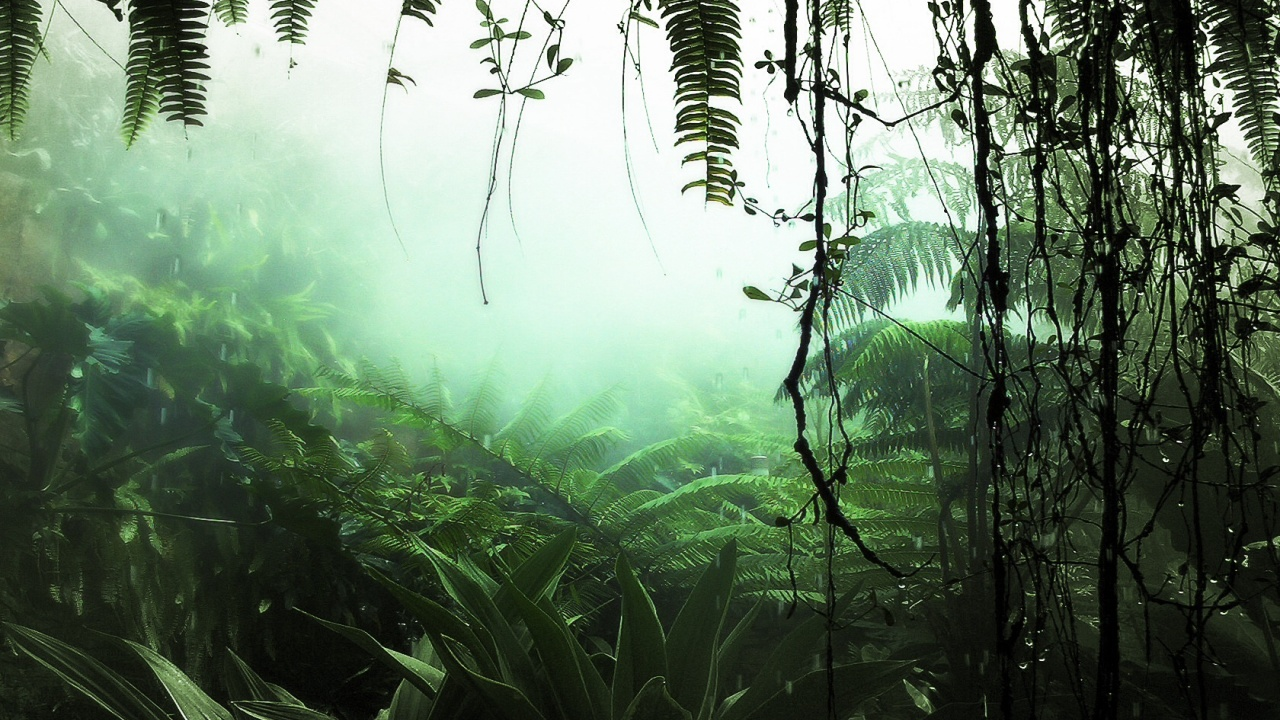 1280x720 Jungle Plants