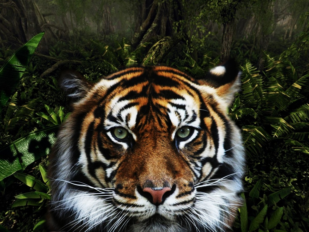 920x520 Jungle Tiger