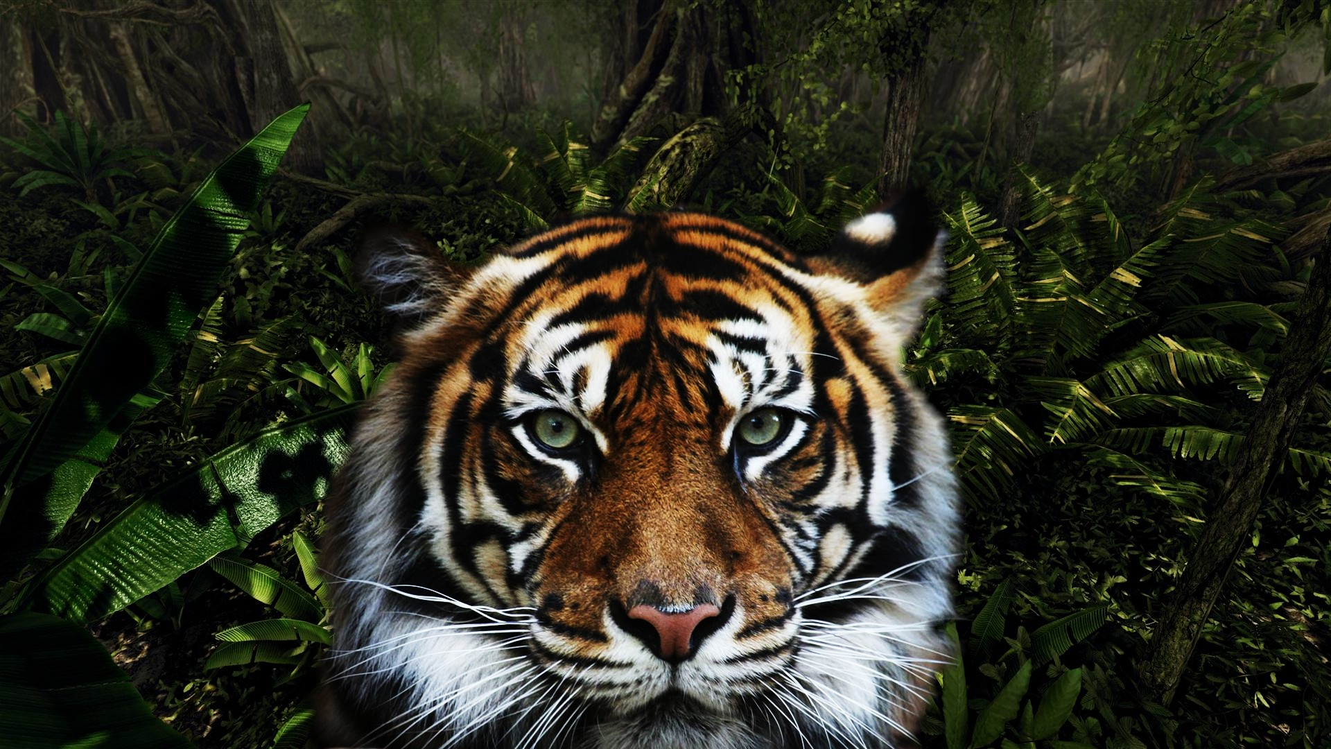1920x1080 Jungle Tiger