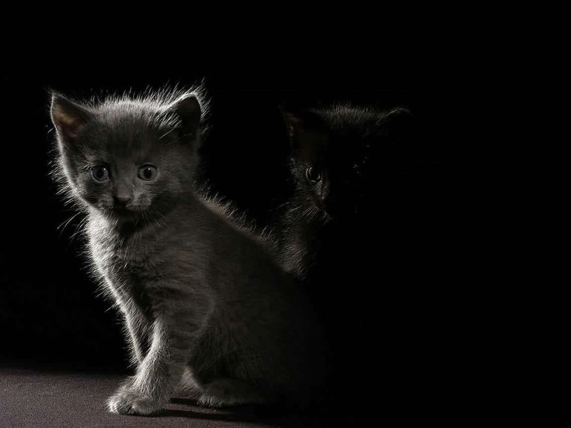 1152x864 Kittens in the dark