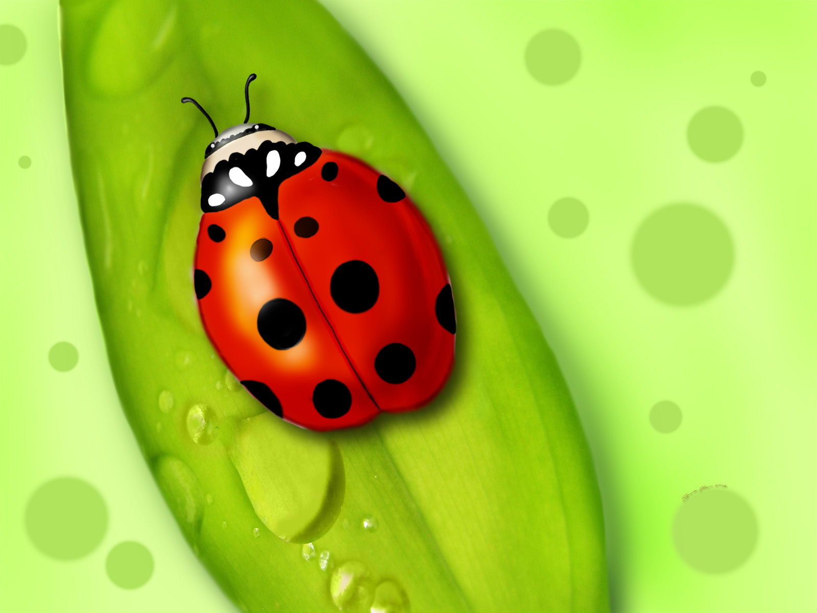 insects ladybirds desktop wallpapers - photo #46