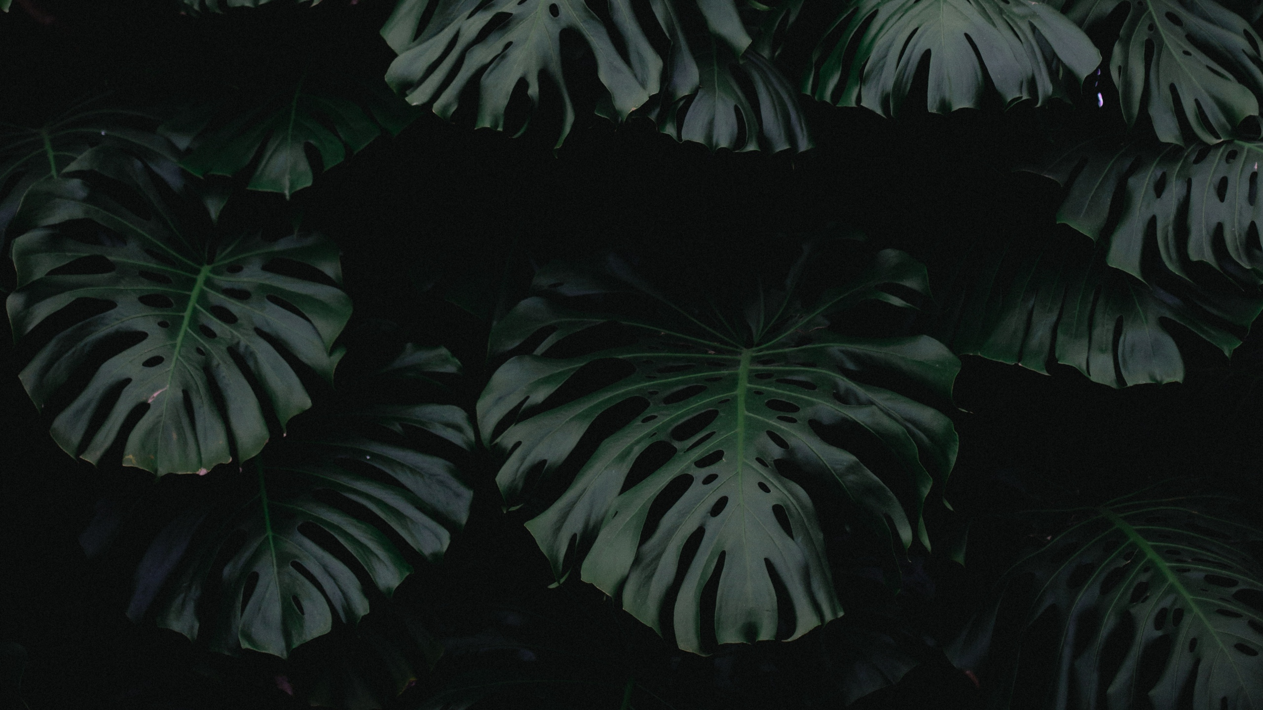 2560x1440 leaf, green, dark, plant