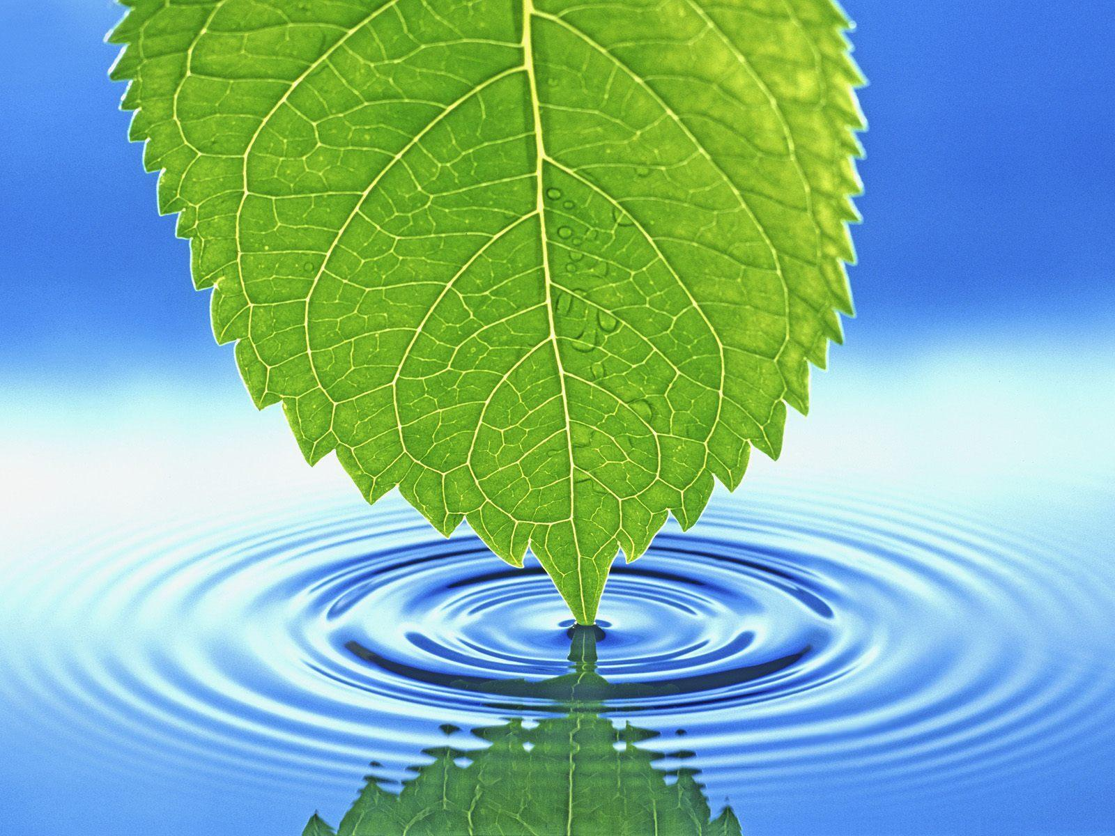 leaf touching water wallpapers leaf touching water stock photos