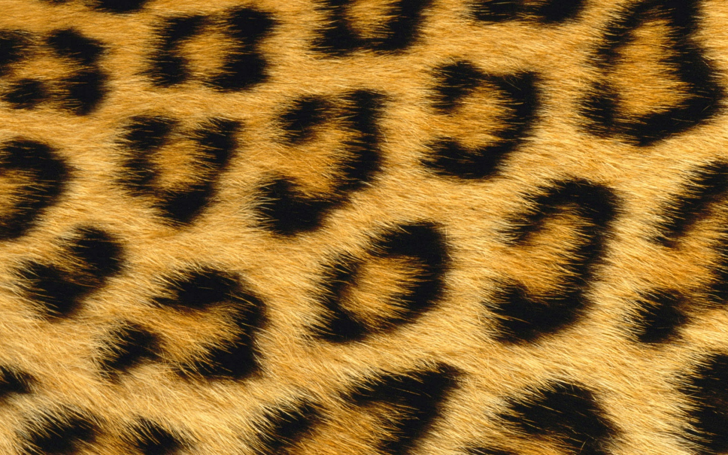 1440x900 leopard skin desktop pc and mac wallpaper