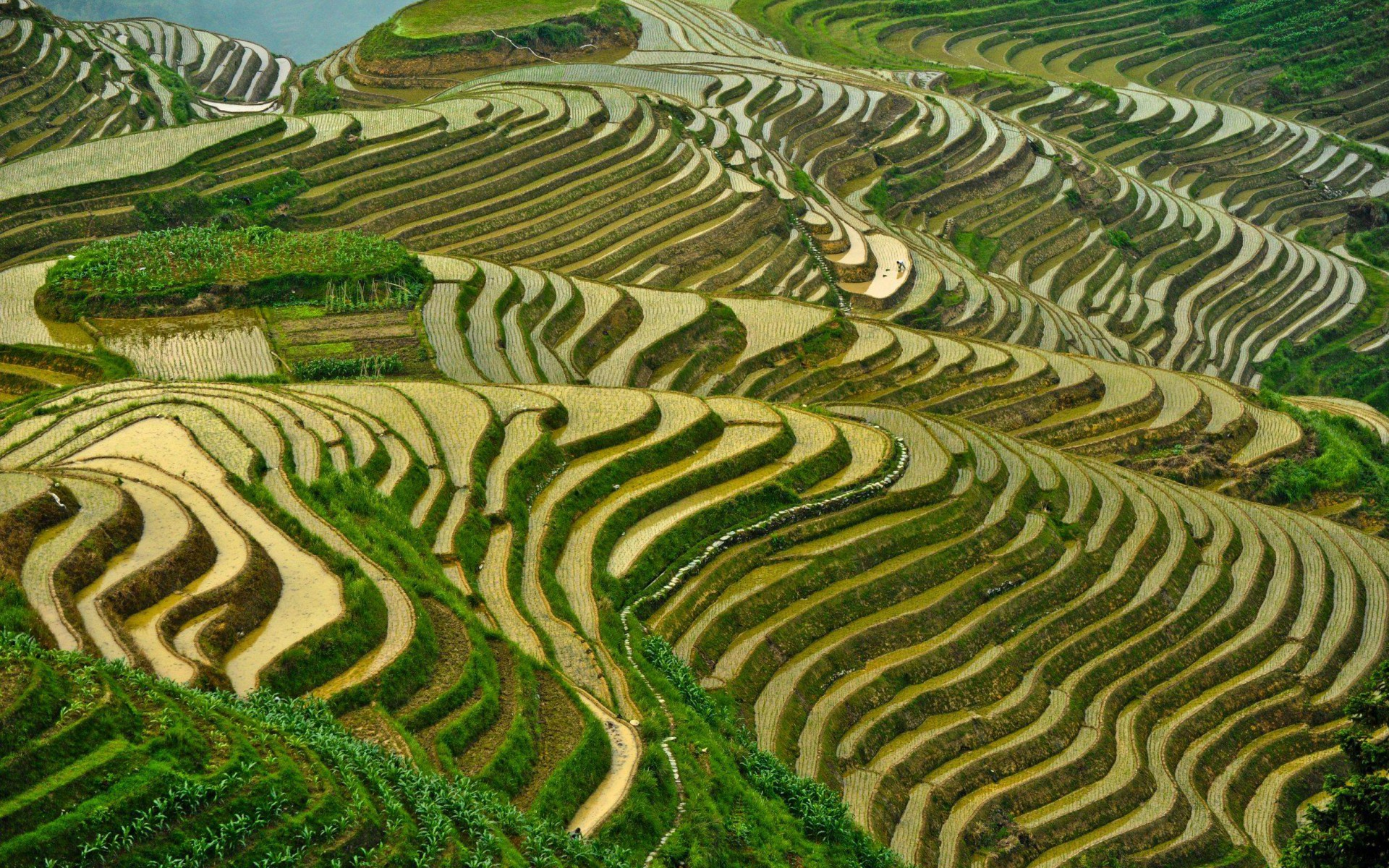 Longji reis terrassen china hintergrundbilder longji for Define terrace farming