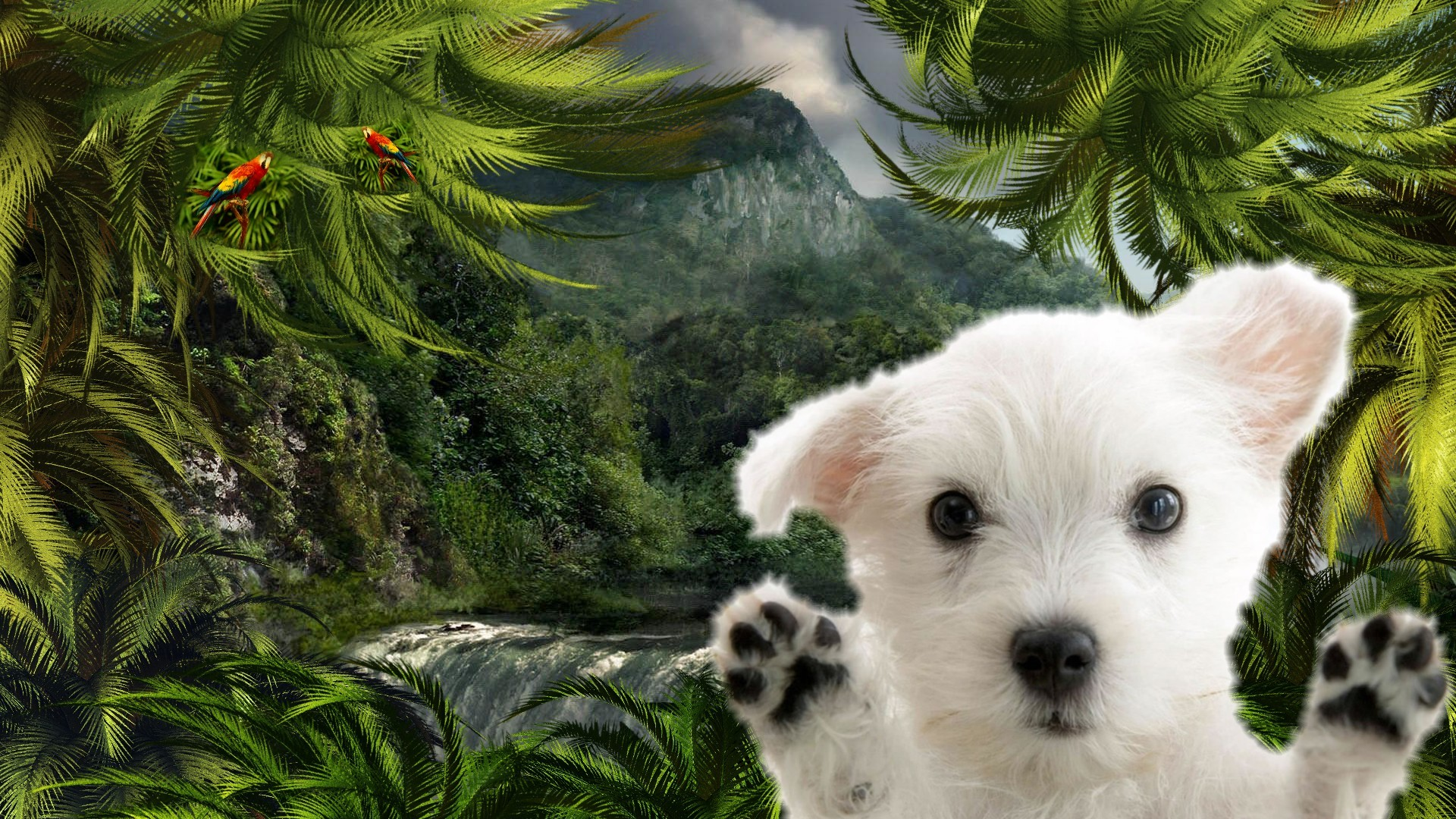 Dogs And Puppies Wallpaper Lost Puppy wall...
