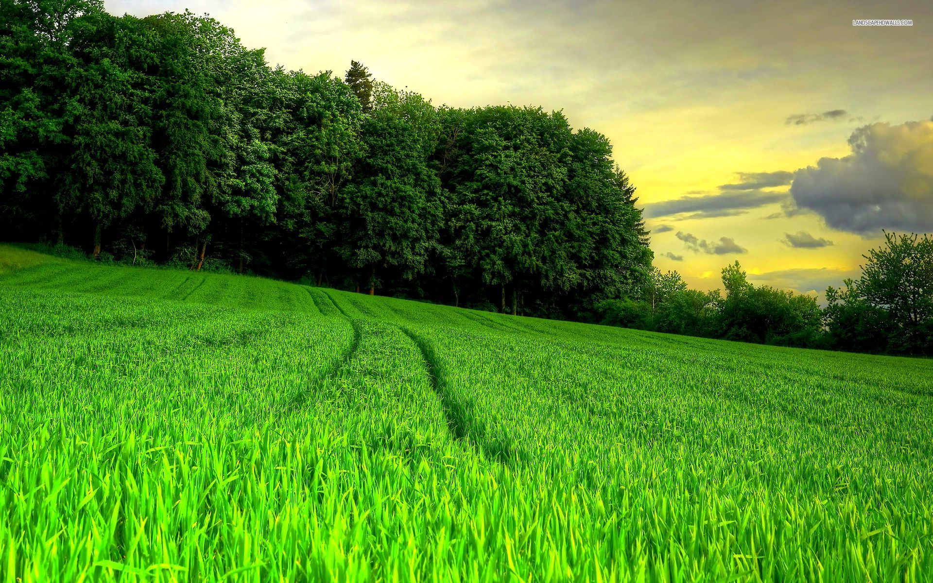 Lovely Grass Field Amp Forest Wallpapers Lovely Grass