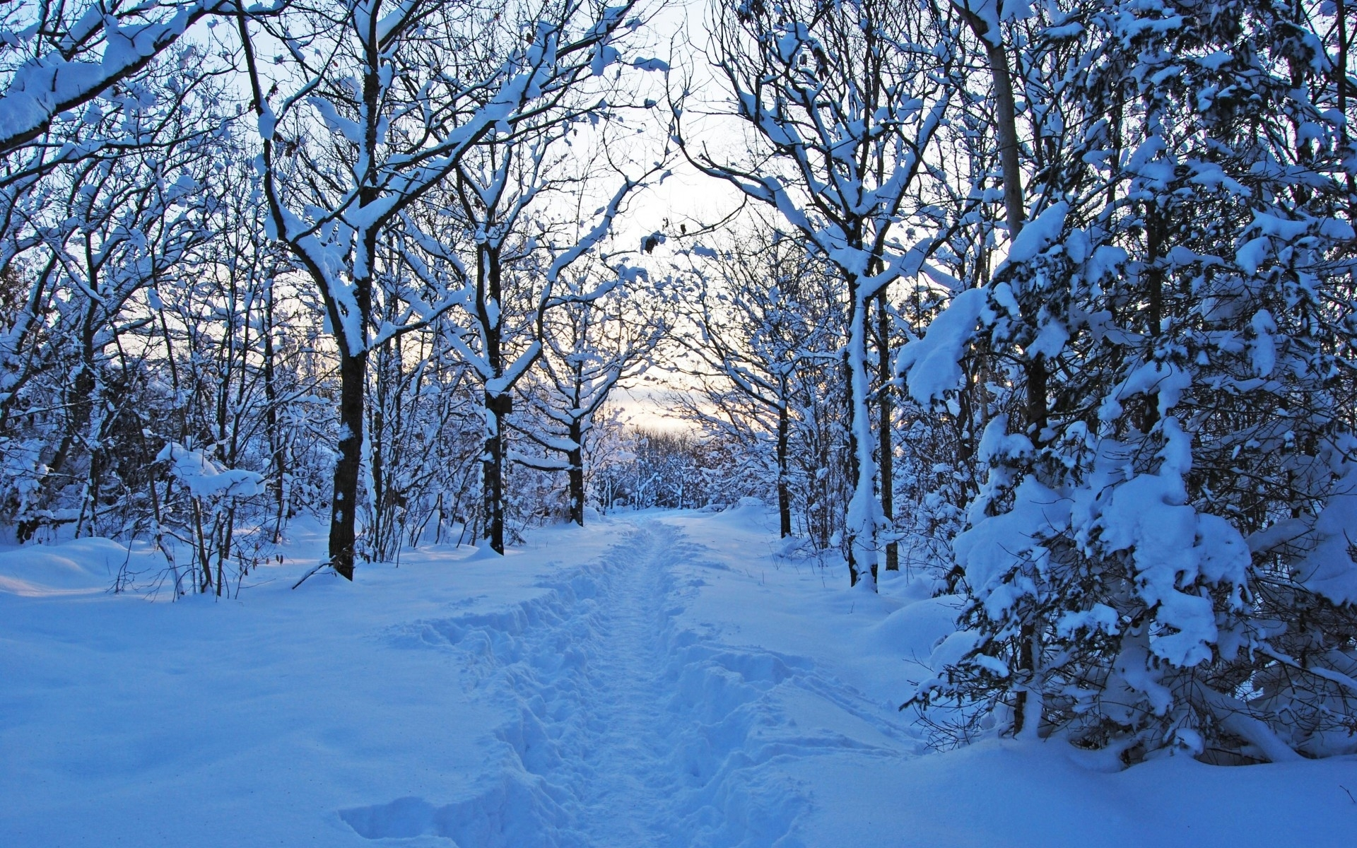 lovely winter forest path wallpapers lovely winter