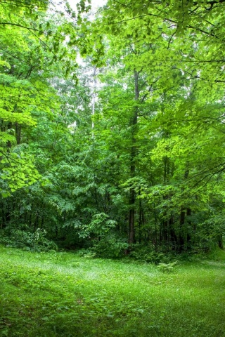 lush green forest wallpaper - photo #5