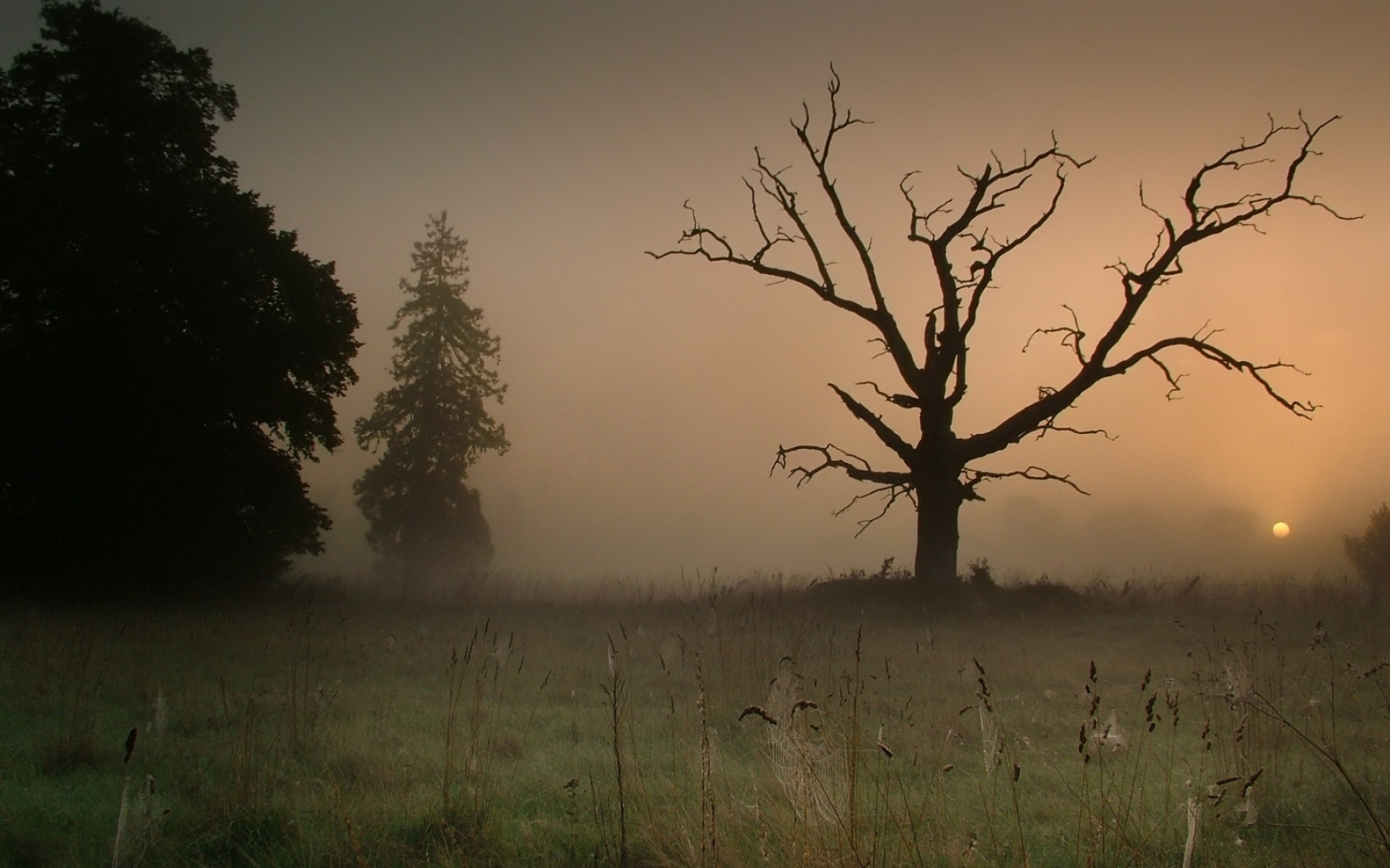 Dark Trees Hd Wallpapers: Meadow Dark Trees Foggy Sunset Wallpapers