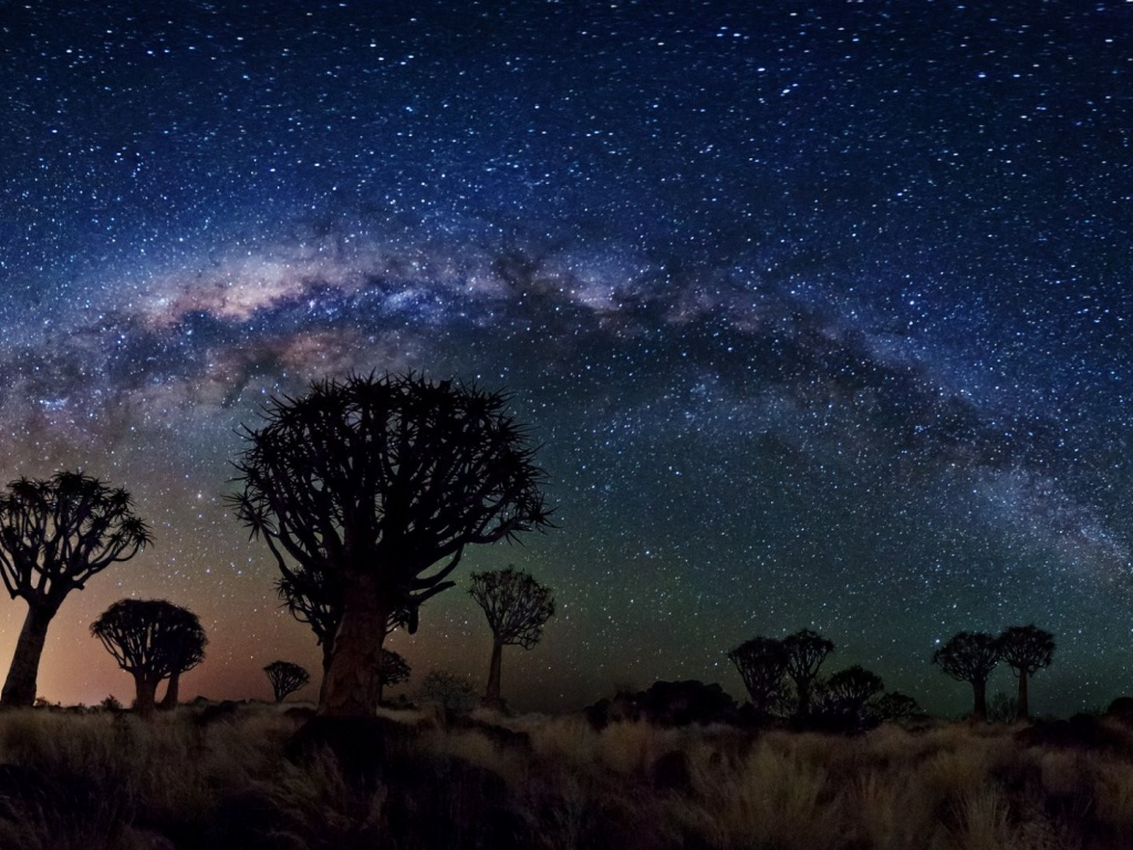 920x520 Milky Way Over Quiver Tree Forest, space, nasa, galaxies, stars