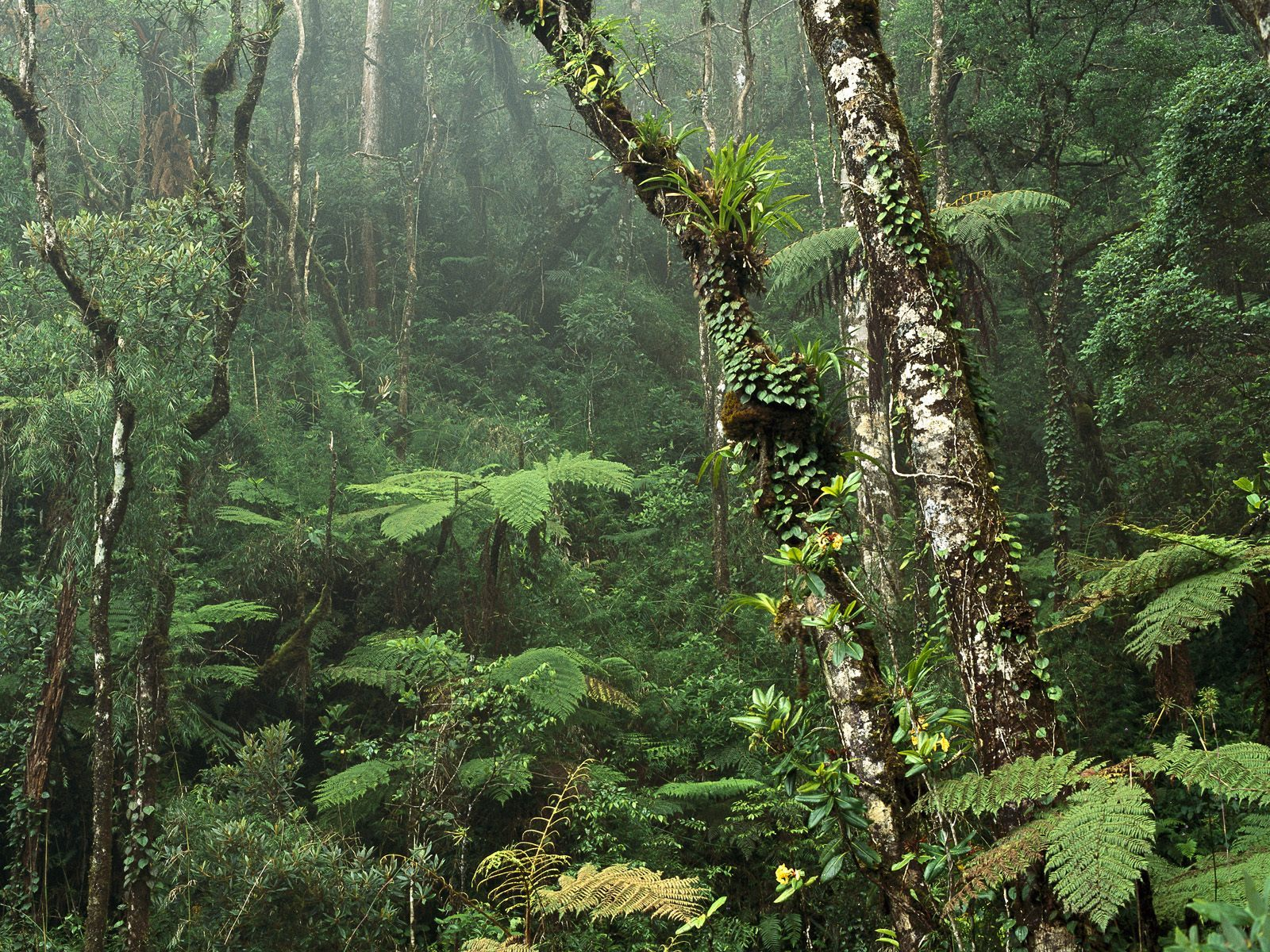 1600x1200 montane rainforest desktop pc and mac wallpaper