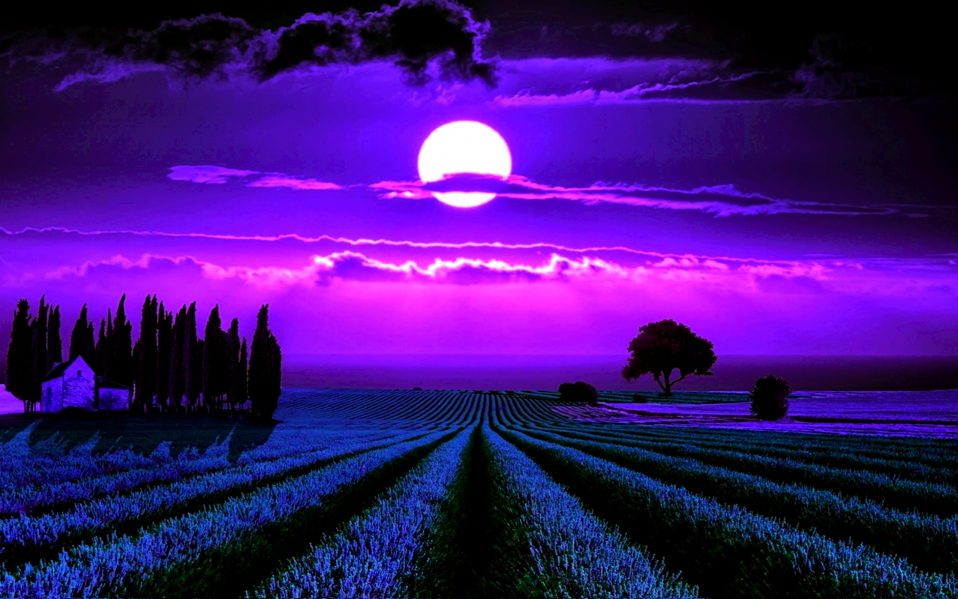 Image Moonlight Lavender Wallpapers And Stock Photos
