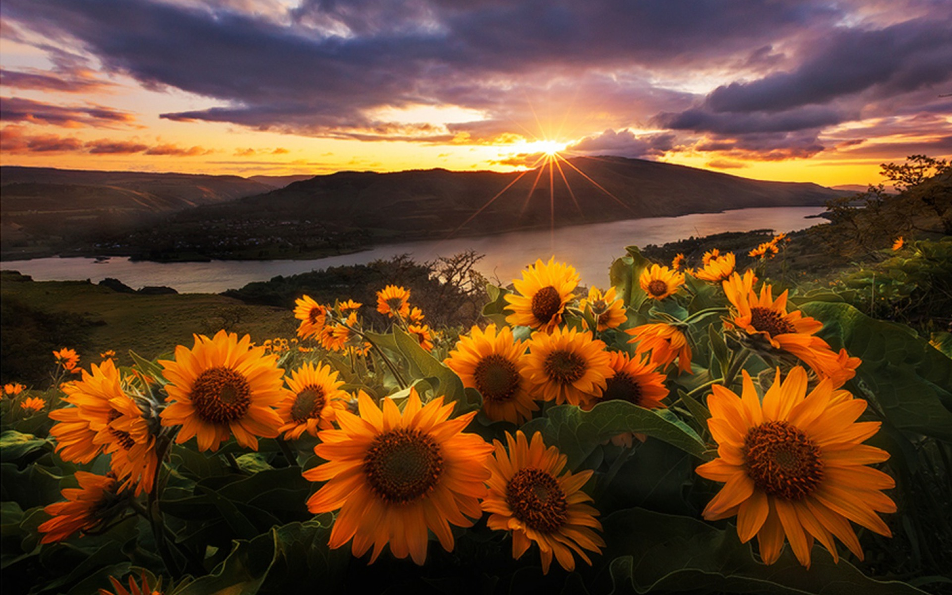 morning sun flowers wallpapers | morning sun flowers stock photos