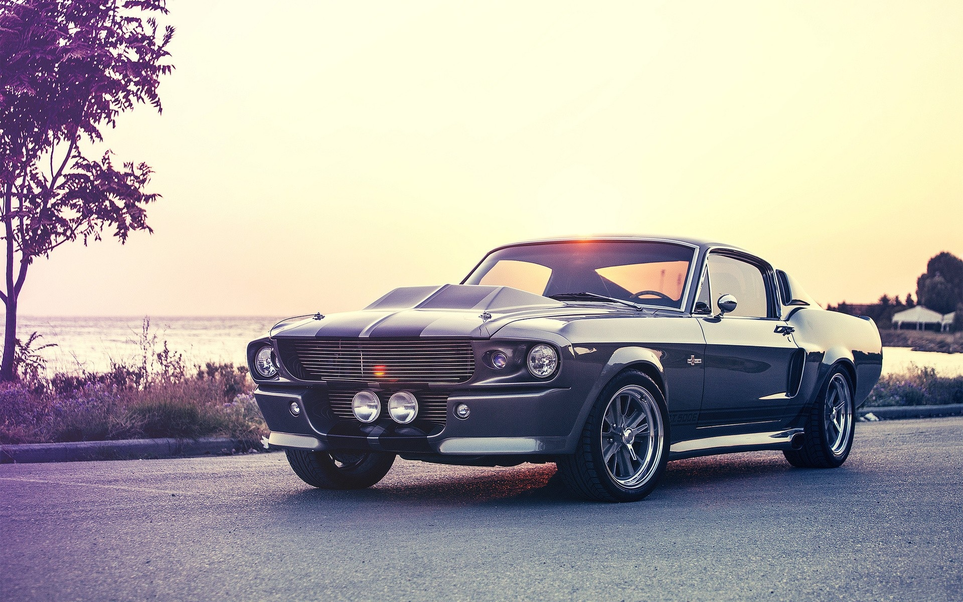 Muscle Car Mustang wallpapers  Muscle Car Mustang stock photos