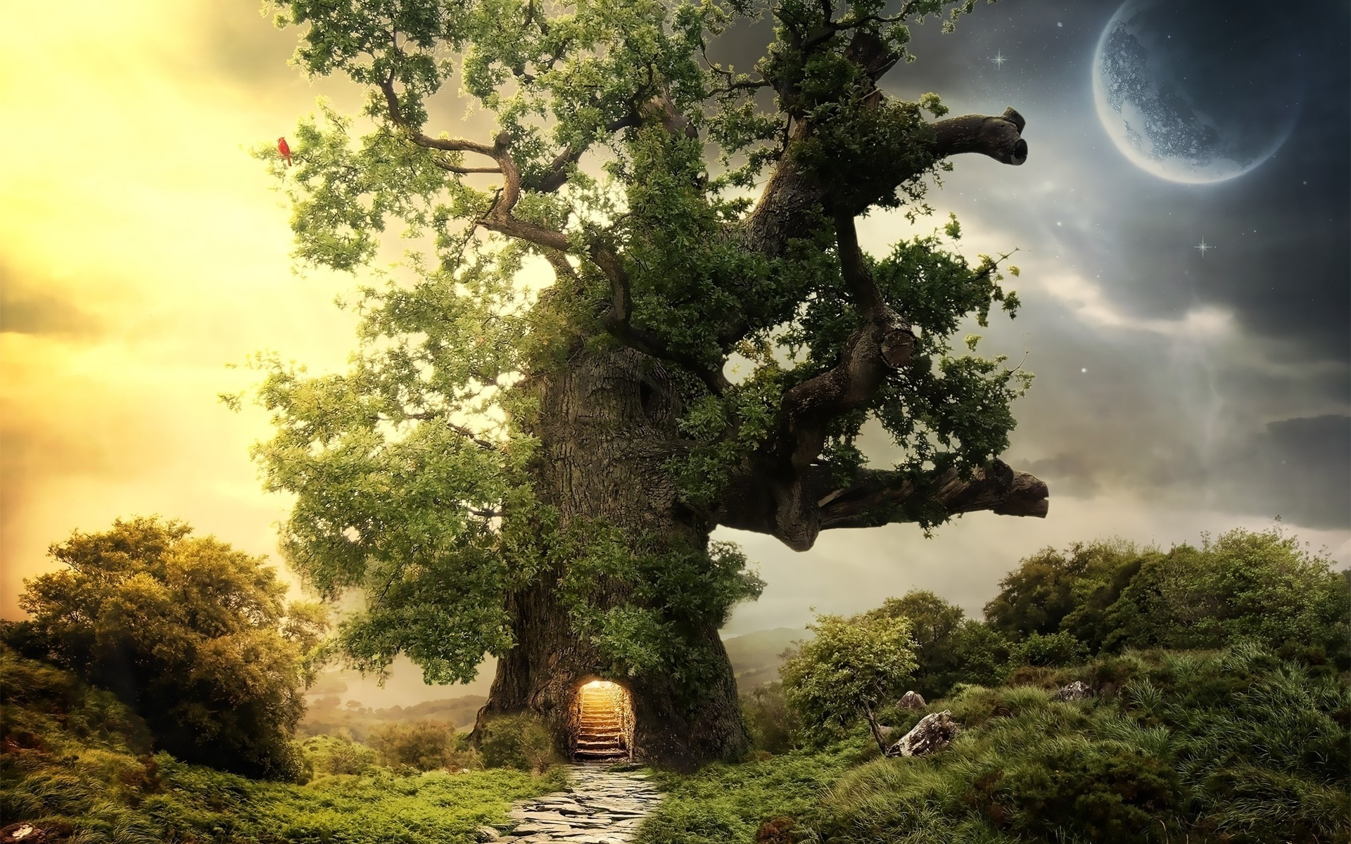 Mysterious Fantasy Tree Wallpapers Mysterious Fantasy