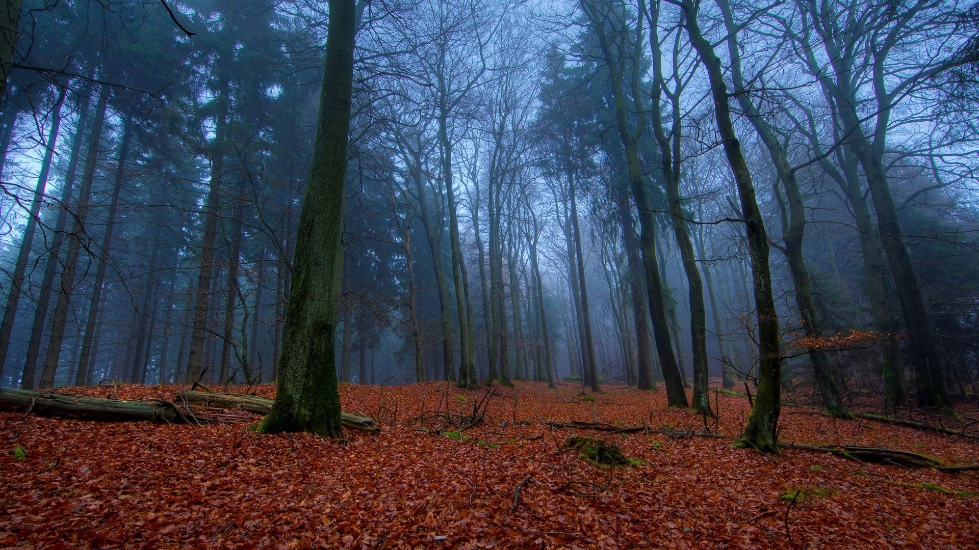 1920x1080 mysterious forest amp red leaves desktop pc and mac wallpaper