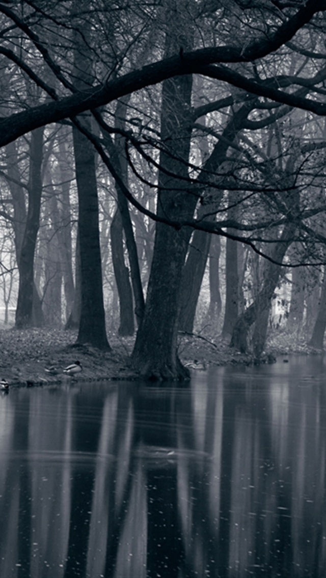 640x1136 Mystic Park Dark Forest Sea Iphone 5 Wallpaper