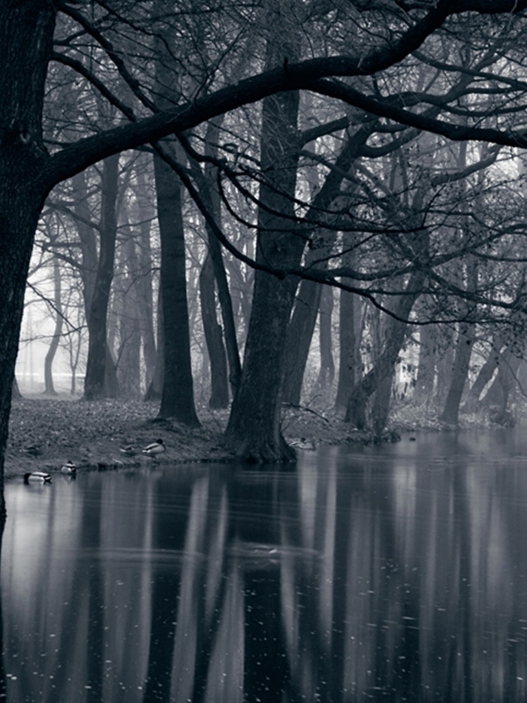 768x1024 Mystic Park Dark Forest Sea Desktop Pc And Mac