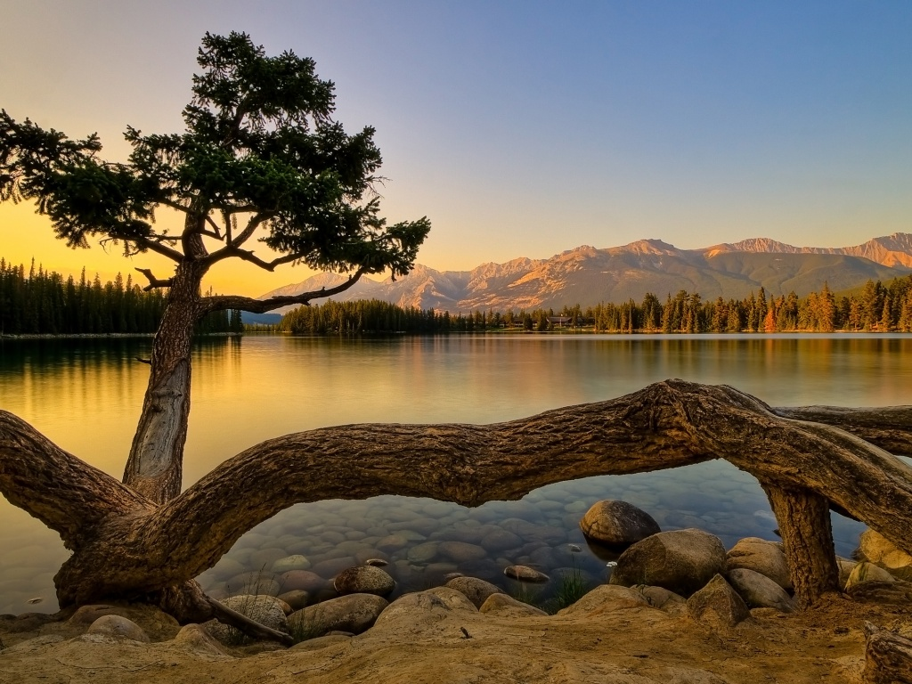 920x520 Nature, lakes, tree