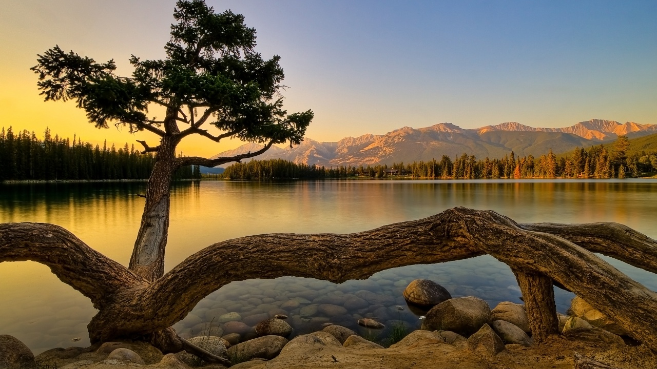 1280x720 Nature, lakes, tree