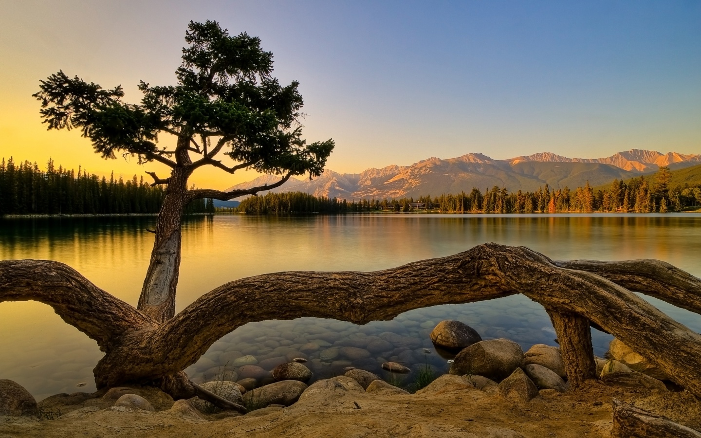 1440x900 Nature, lakes, tree