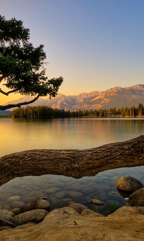480x800 Nature, lakes, tree