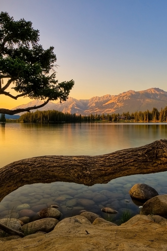 640x960 Nature, lakes, tree